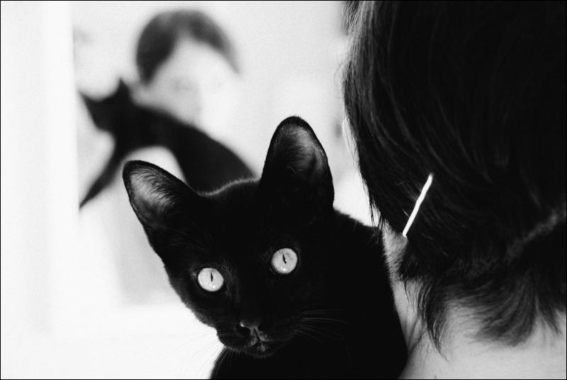 Black cat at home. Copyright Fabrizio Gandini. www.fabriziogandini.com